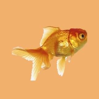 für Fische